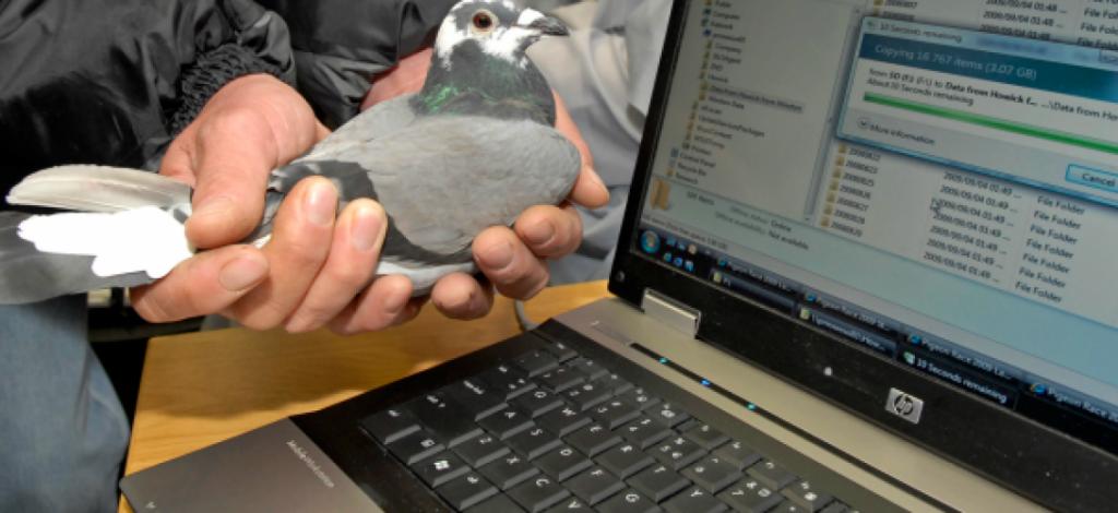 pigeonsvoyageurs